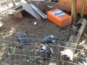 Animais mortos em Cabo Frio (Foto: Blog Repórter Eduander Silva)