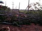 Duas cidades do AM ficam sem luz após árvore atingir rede de elétrica