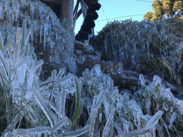 O frio deixou a vegetação coberta de gelo em Urupema, na Serra de SC (Foto: Pedro Rockembach/RBSTV)