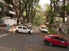 Rua 'mais bela do mundo' foi devastada pelo vento em Porto Alegre