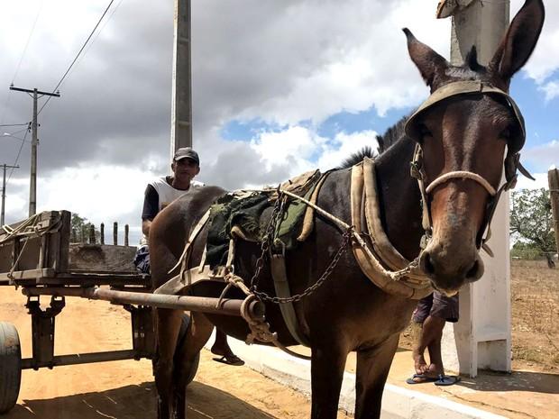 Avelino Barbosa da Silva trabalha com uma carroça em Feira de Santana (Foto: Alan Tiago Alves/G1)