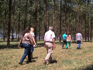 Embrapa optou por integração com plantação de eucaliptos (Foto: Stefhanie Piovezan/G1)