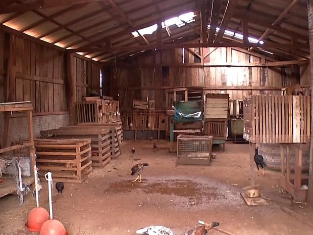 Animais foram encontrados pelos fiscais dentro de um barracão (Foto: Reprodução/TVCA)