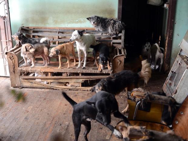 Cães foram removidos de residência devido a condições precárias (Foto: Guerreiro/Divulgação PMPA)
