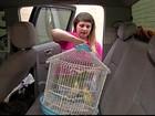Transporte de animais de estimação exige cuidados