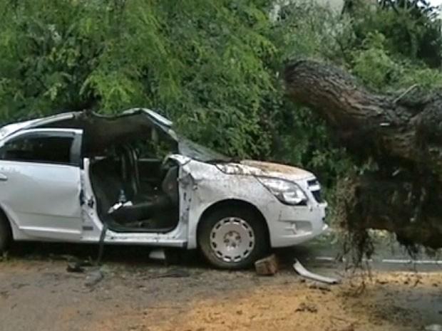 Árvore caiu sobre táxi em Higienópolis, na região central de São Paulo (Foto: Reprodução/TV Globo)
