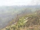 Parte da Amazônia pode deixar de ser floresta, afirma estudo