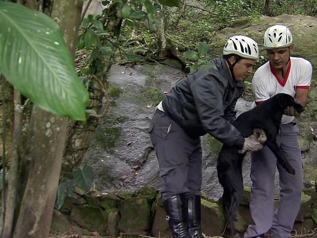 Cachorro é resgatado em morro de Santos SP (Foto: Reprodução/TV Tribuna)