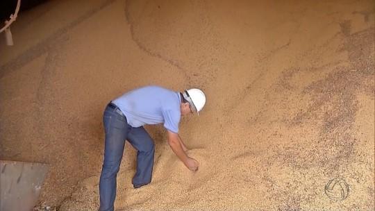 Armazéns se preparam para guardar supersafra de soja e milho