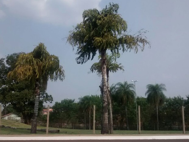 Céu em Campo Grande na tarde deste domingo (18) (Foto: Juliene Katayama/G1 MS)