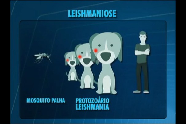 Leishmaniose é uma doença que não tem cura no cachorro infectado (Foto: Reprodução/TV Fronteira)