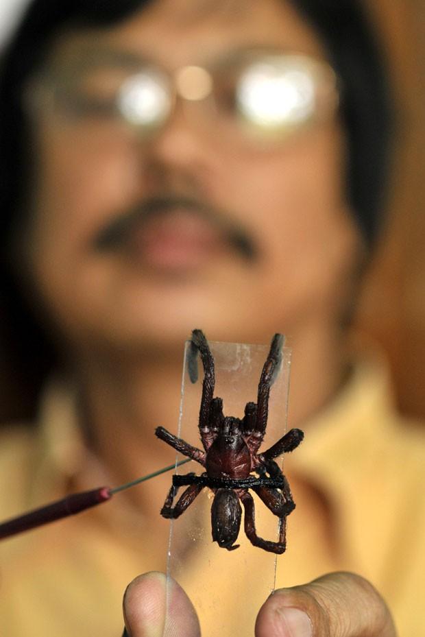 O professor Ratul Rajkhowa, do departamento de zoologia da faculdade Cotton, mostra uma aranha que seria da espécie que tem se proliferado na vila de Assam (Foto: AFP/Stringer)