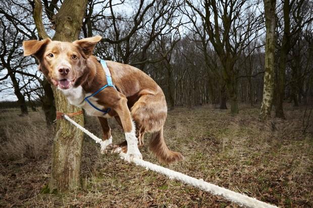 'Ozzy' detém o recorde mundial para travessia mais rápida em uma corda bamba (Foto: Guinness World Records/AFP)