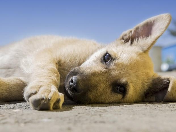 Donos devem ficar atentos ao comportamento do animal  (Foto: Divulgação/Pixabay)