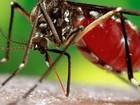 Manaus tem 2 confirmações de zika e 18 suspeitas de gestantes infectadas