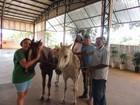 Cavalos furtados da Apae de Batatais são encontrados em área de mata