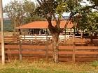 Polícia investiga roubo de mais de 40 animais em fazenda de Rio Verde, GO