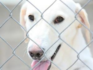 Mais de 300 animais estão disponíveis para adoção (Foto: Divulgação)