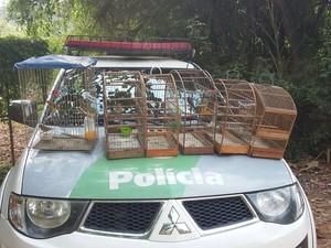Aves apreendidas em São José dos Campos (Foto: Divulgação/Polícia Ambiental)