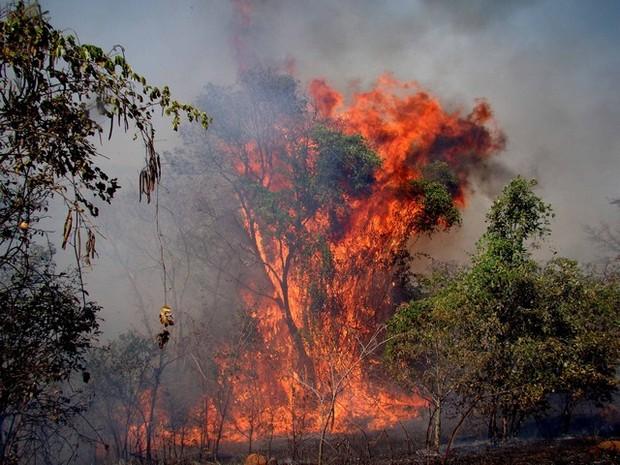 Incêndio atingiu área de empresa em Patos de Minas (Foto: Hamilton Amorim/Arquivo Pessoal)