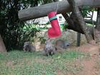 Animais de zoo em SC ganham presentes e guirlandas comestíveis