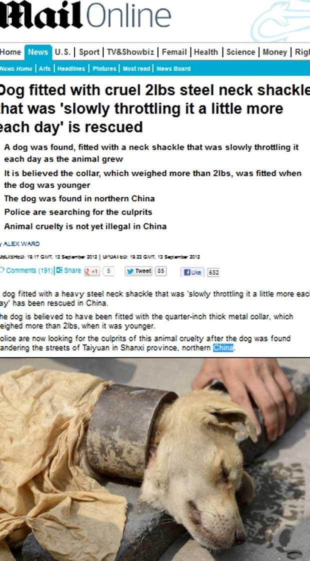 Cão é resgatado com colar de aço apertado na China (Foto: Reprodução)