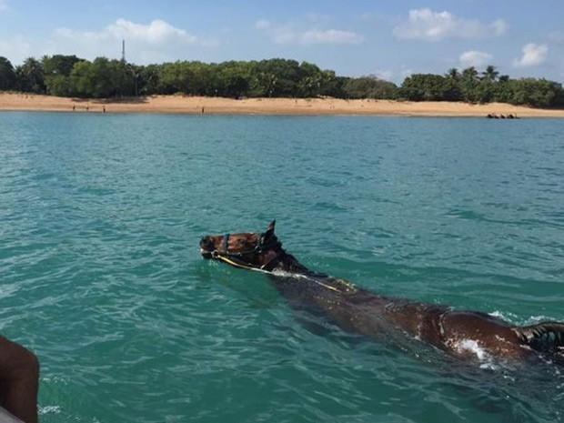Há duas semanas, Trippe fez parte de equipe que ajudou a resgatar cavalo encontrado à deriva (Foto: Rick Trippe/ BBC)