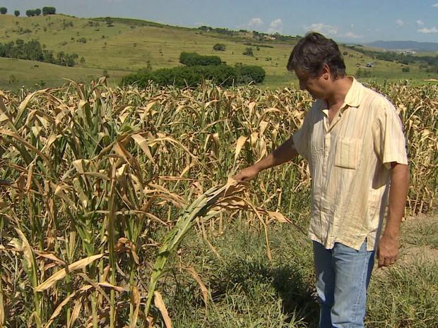 Produtor de leite observa folhagem seca e que dificulta a alimentação das vacas nas fazendas do Vale do Paraíba. (Foto: Reprodução/TV Vanguarda)