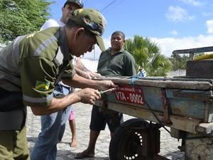 Carroças receberam placas de identificação (Foto: Gustavo Batista / Codecom)