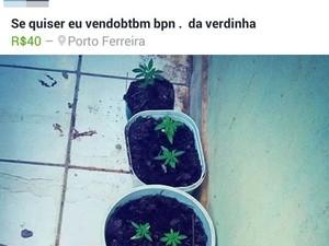Polícia descobriu que venda era feita pela internet (Foto: Divulgação/Polícia Militar de Porto Ferreira)