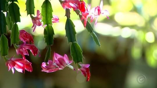Zootecnista de Marília desenvolve 100 tonalidades diferentes de flor no quintal de casa