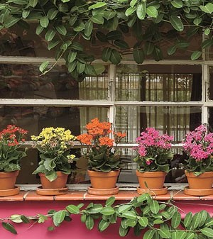 Casa com flores (Foto: Casa e Jardim)