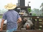 Evento de pecuária passa por regiões Norte e Médio-norte de Mato Grosso