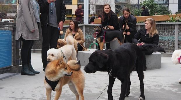 O Dog Park tem 100 m² e conta com fontes e espaços de brincadeiras para os animais (Foto: Divulgação)