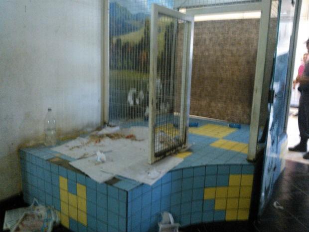 Animais são recolhidos de pet shop após denúncia de maus-tratos (Foto: Ana Paula Yabiku/G1)