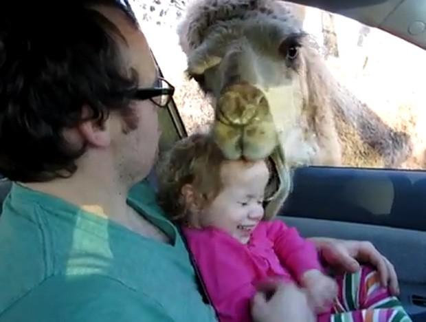 Após ser alimentado, camelo acabou 'mordendo' a cabeça de menina, 'ataque' não deixou ferimento (Foto: Reprodução/YouTube/tinzer30)