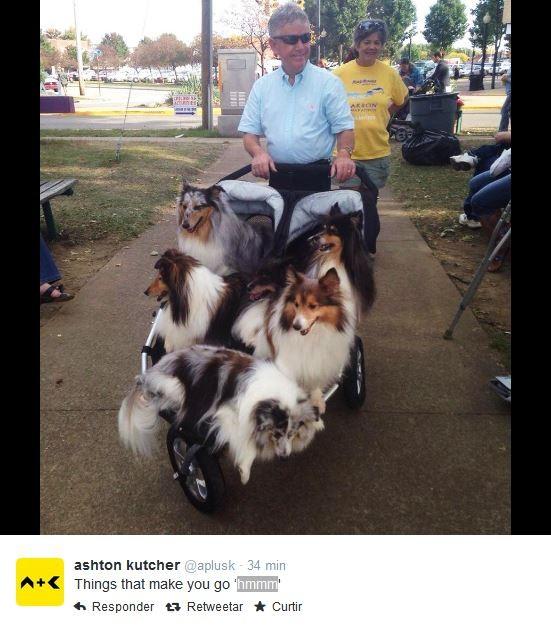 Ashton Kutcher (Foto: Reprodução/ Twitter)