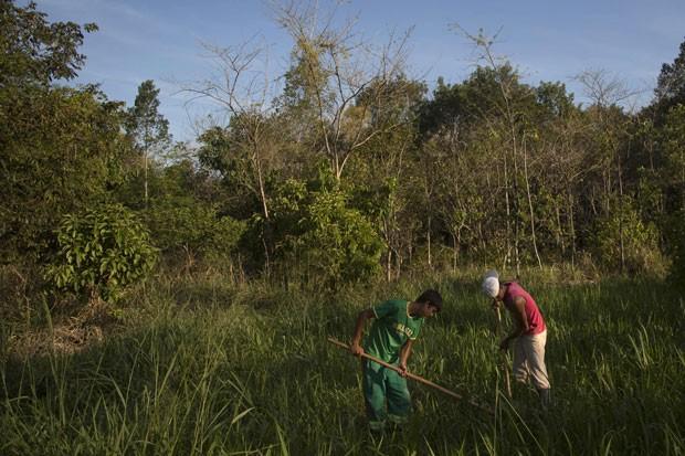 Funcionários trabalham em um projeto de reflorestamento na região de Silva Jardim, no Rio de Janeiro. Governo estadual quer replantar 34 milhões de árvores até 2016 para compensar emissões de gases (Foto: Felipe Dana/AP)