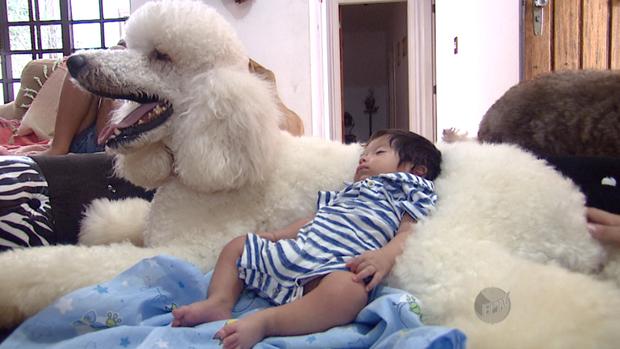 Resultado de imagem para poodle gigante com pessoas