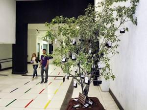Árvore com bolsas de sangue artificial chamam a atenção (Foto: Ivair Vieira Jr/G1)