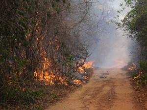 Incêndio na Floresta Nacional de Palmares, no Piauí (Foto: Francisco Gilásio/CCOM)