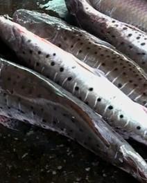 Mercado de peixes, Reino Unido