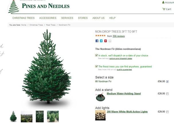 Eis a árvore escolhida por Meghan Markle e Príncipe Harry (Foto: Reprodução)