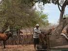Seca agrava escassez de mão de obra no RN, reclamam agricultores