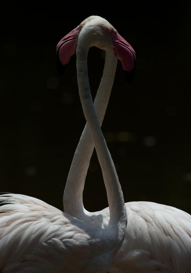 Flamingos fazem 'oito' em lago na Malásia neste domingo (6) (Foto: Mohd Rasfan/AFP)