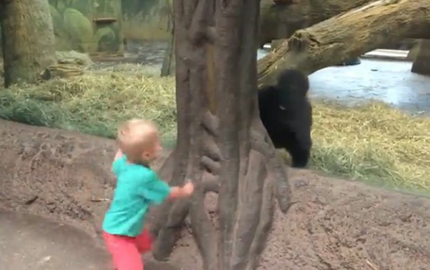 Vídeo fofo de menino e bebê gorila brincando de 'esconde-esconde' virou hit (Foto: Reprodução/Facebook/Sherry Chute)