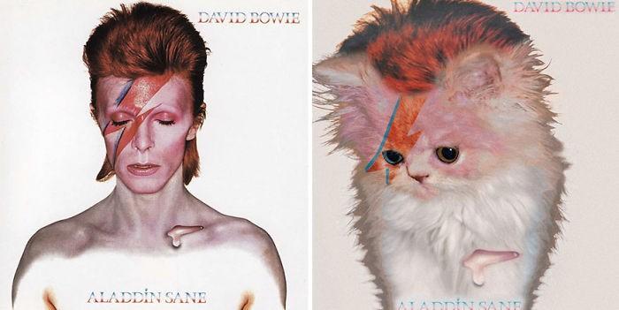 (Foto: The Kitten Covers)
