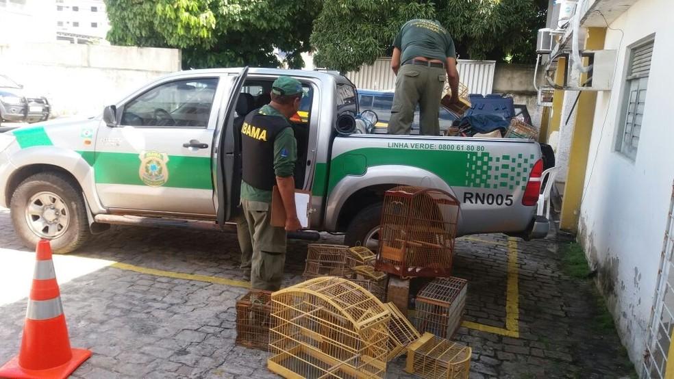 Pássaros apreendidos foram levados para a sede do Ibama, em Natal (Foto: Divulgação/PRF)