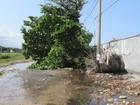 Caminhão derruba árvore e deixa bairro sem água em Praia Grande