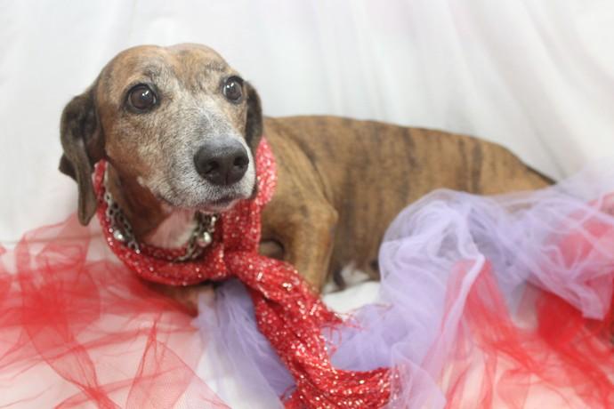 Essa daí é a Adélia, uma cadelinha fofa e cheia de amor para dar (Foto: Divulgação/ TV Gazeta ES)